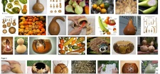 gourd pictures