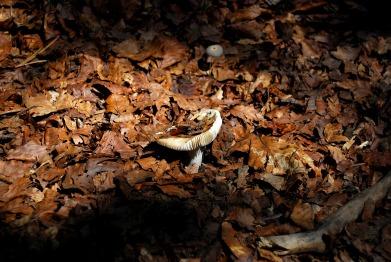 mushroom-1812766_1920
