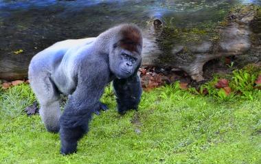 ape-2973975_1920