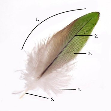 feather parts.jpg