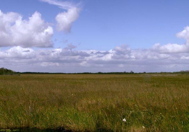 800px-Everglades_Sawgrass_Prairie_Moni3